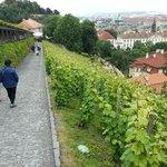 Bajando del castillo entre viñas