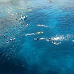 Snorkelers and divers from the pier