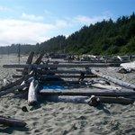 Driftwood Windbreaks!
