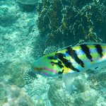 colourful fish on the reef