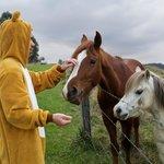 friendly horses