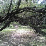 Recerba y bosque