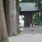焼山寺の大杉。神聖な空間。