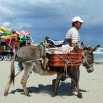 Fruiterer donkey