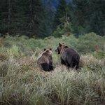 Mom & cub in the Estuary