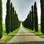 Private road in Chianti