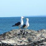 Fauna de Punta Colorada