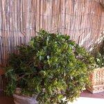 Cactus magnifique sur la terrasse