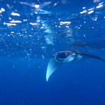 Yes ! you can see Manta Rays there ! Amazing