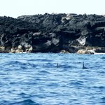 Surrounded by Spinner Dolphins