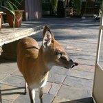 Breakfast visitor