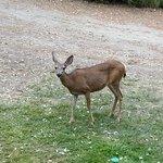 Deer feeding in the morning
