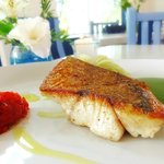 Caribbean Red Snapper
