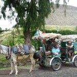 Burro Taxi in Teotihuacan