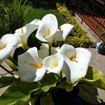 las flores preferidas de Diego Rivera