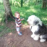 LMy sone playing with resident sheepdog at George Borrow Hotel, Ponterwyd, Wales