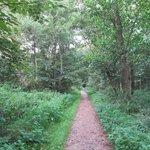Wandeling doorheen het nabijgelegen bos.