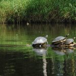 Should have been Turtle Creek instead of Turkey Creek