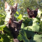 Kittens in the Vines