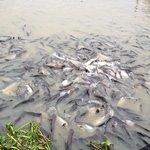 nehirdeki balıklar