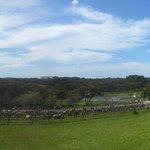 Panorama shot of the vineyard