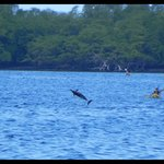 Dolphins & Kayakers