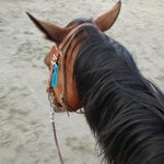 My Horse - The tailgater
