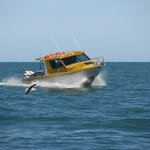 South Bay Fishing Charters