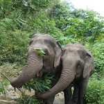 BEES - Burm and Emily's Elephant Sanctuary