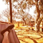 Hammock under treehouse & deck overlooking waterhole