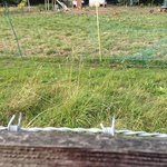 Barbed wire running behind rail on outer fence to chicken coop.