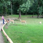 The deers follow plastic bags sound )