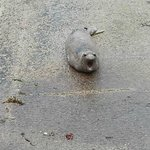 Seal on the boat launch