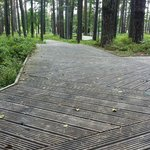 Wooden paths