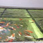 Foto do aquario,o restaurante é em baixo.