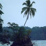 View from our cabin of the surrounding jungle