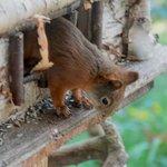 Lo scoiattolo che ruba i semi agli uccellini