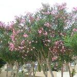 jolies arbustes