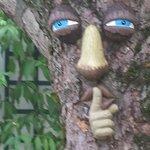 "Un des arbres de la cour ""très marrant"""