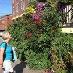 garden plants eat the entryway