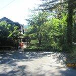 Side Yard/Garden