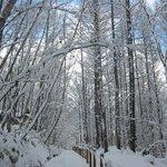 2011年11月は大雪