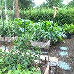 Come stroll through our organic garden to see where your dinner is grown!