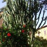giardino villa pirandello