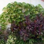 Casa Garden - plants
