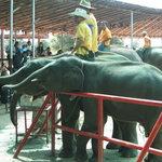 Elephant Study Center Surin