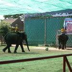 象のサッカーPK対決