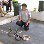 蛇のショー