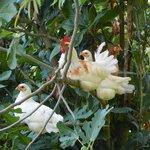 het liefelijke van loslopende kippen.