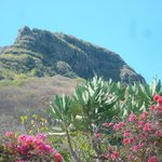 Le Mont Tamarin